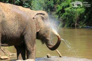 Elephant bathing in the river while on elephant tour