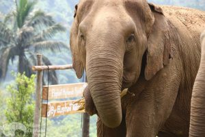 Intimate encounter with elephants while on Thailand vacation