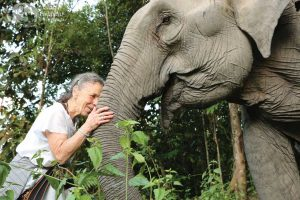 Elephant sanctuary volunteer