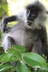 Rescued monkey at Cambodia Elephant Sanctuary