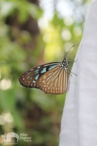 Butterfly at Elephant Sanctuary Cambodia