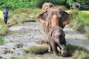 Elephants roaming at elephant tour