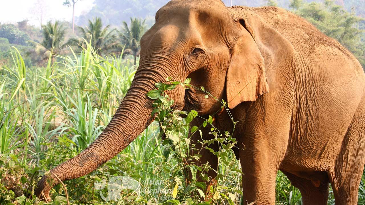 Elephant Delight Ethical Elephant Tour