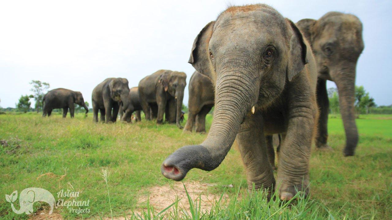 Elephant Homestay Khun Chai Tong