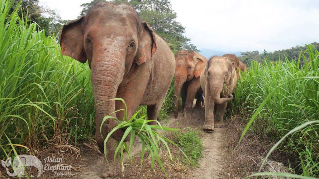 Elephant Refuge Project Ethical Elephant Tour