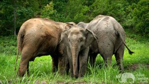Elephant family at ethical elephant tour near Chiang Mai in Thailand