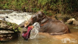 Bathing elephants in a beautiful jungle stream in Northern Thailand