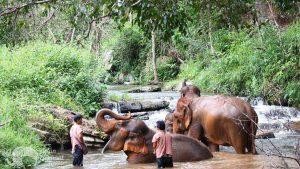 Elephant bathing at Karen Elephant Experience