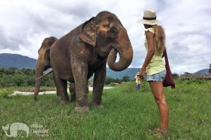 Observing Thai elpehant while on ethical elephant tour