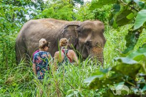 Observing elephants in the forest while on elephant tour in Thailand