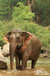 Elephant on the river bank in Northern Thailand