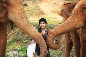 Intimate encounter with elephants at ethical elephant tour near Chiang Mai in Thailand
