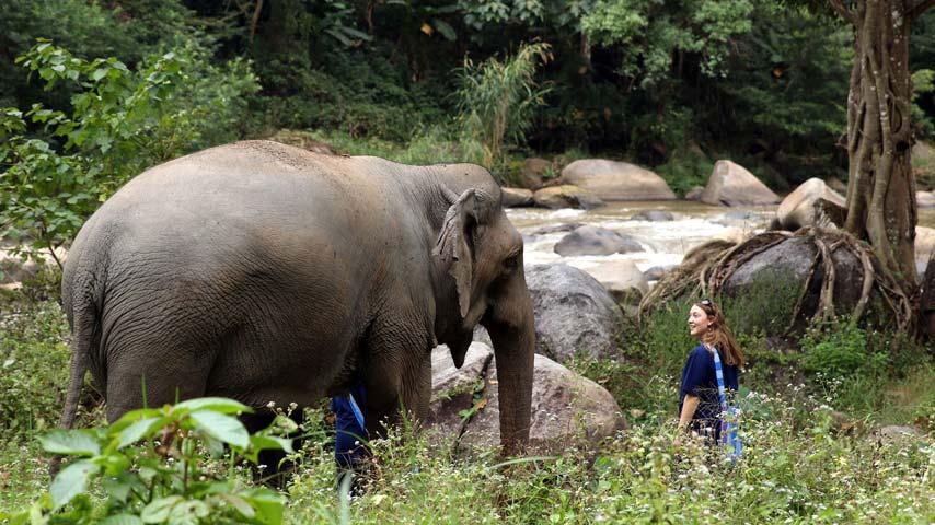 walking with elephants at elephant sanctuary near chiang mai