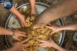 making banana rice balls at ethical elephant sanctuary near Chiang Mai in Thailand