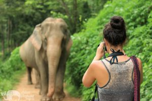 Photographing elephants in nature at ethical elephant sanctuary near Chiang Mai in Thailand