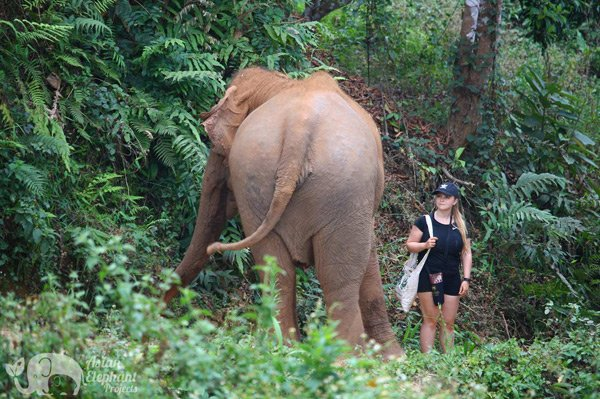 looking at elephant with awe at ethical elephant tour thailand