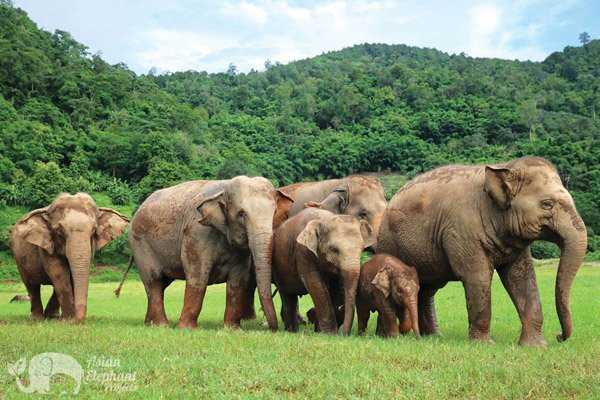 Elephant family with baby at Elephant Nature Park