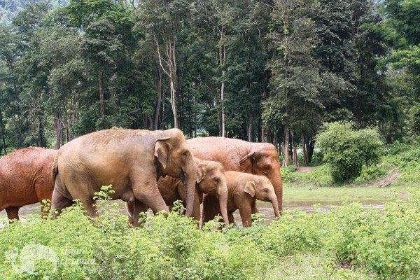 Elephant family at Elephant_Nature_Park