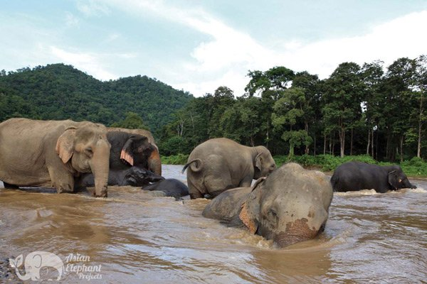 Elephants bathing at Elephant Nature Park
