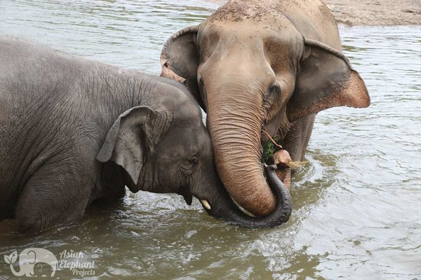 Intimate moment at Elephant Nature Park