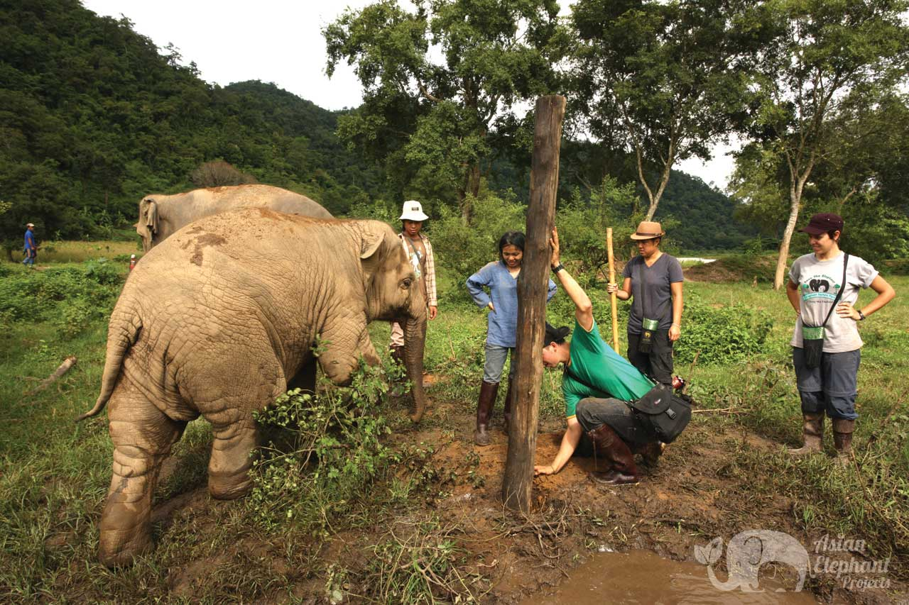 Volunteer at at Elephant Nature Park