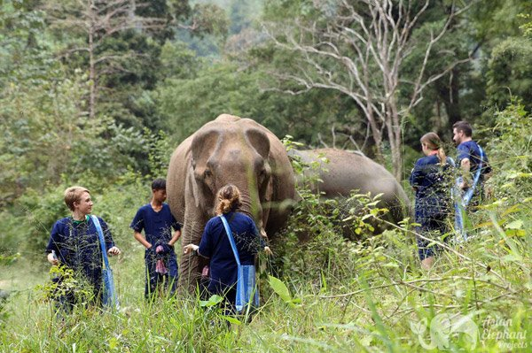 Walking with elephants at ethical elephant tour while in vacation in Thailand