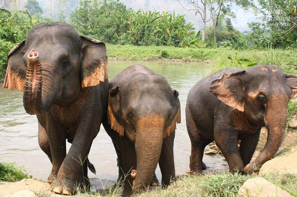 elephants seen on vacation in Northern Thailand