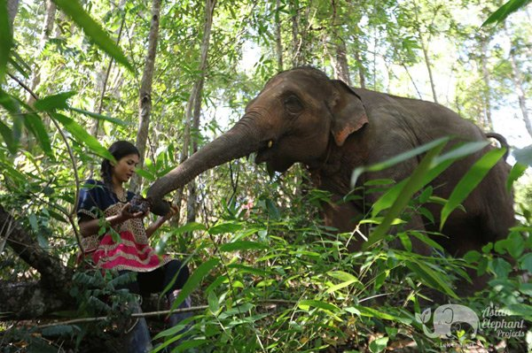 close encounter with elephants in the jungle in Thailand