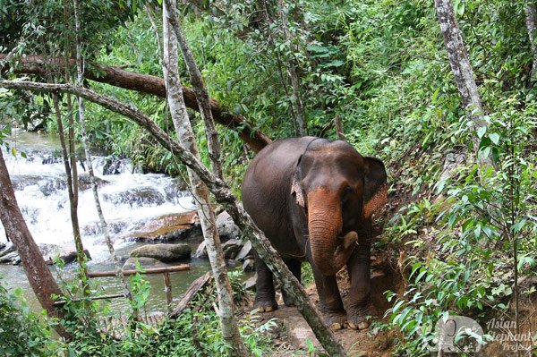 Elephants socialize by a waterfall in Thailand