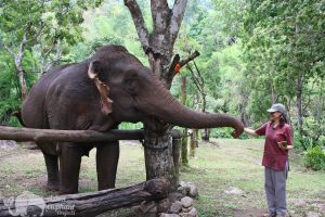Feeding elephants at at at ethical elephant sanctuary near Chiang Mai in Thailand