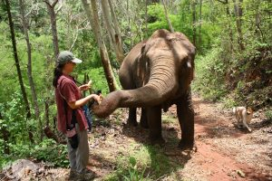Feeding elephants bananas in the forest at at ethical elephant tour in Thailand near Chiang Mai