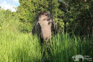 Ethical elephant sactuary Cambodia