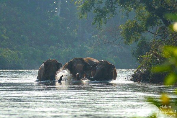 Elephant Haven Kanchanburi