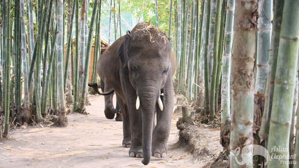 Young elephants walking at Elephant Heaven ethical elephant sanctuary