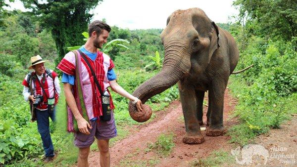Feeding elephants on ethical elephant tour