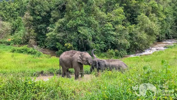 Elephants socializing at Karen Elephant Habitat ethical elephant sanctuary