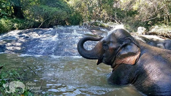 Elephant bathing in a stream at Karen Elephant Reteat ethical elephant sanctuary