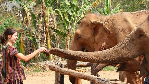 Fedding elephants on elephant tour Thailand