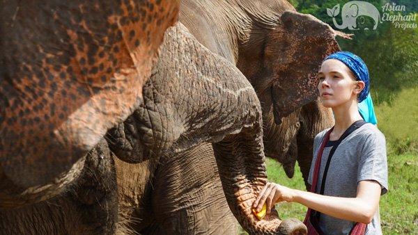 Feeding elephants in Thailand