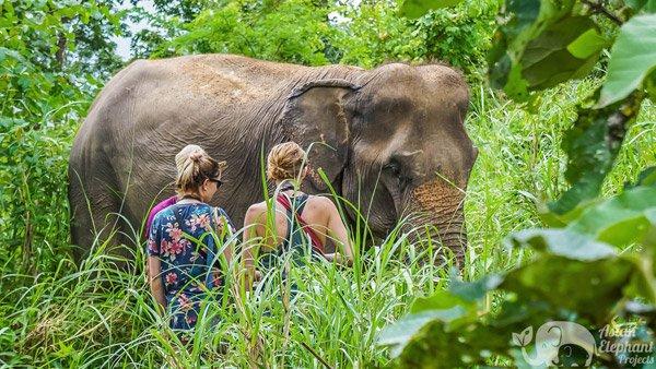 Observing elephants on ethical elephant tour