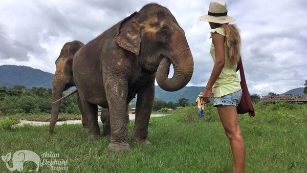 Observing elephants in Thailand