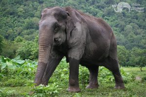 beautiful elephant at Pamper a Pachyderm