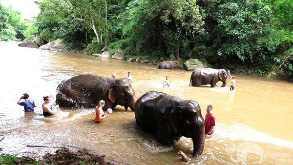 Bathing elephants on ethical elephant tour