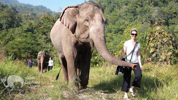 Walking with elephants in nature