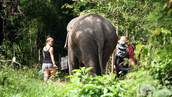 walking iwth elephants at Ethical elephant sanctuary Thailand