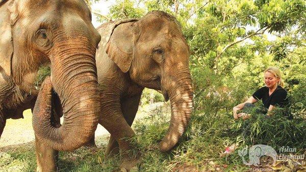 Close encounter with elephant on ethical elephant tour