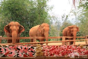 Feeding elephants at ethical Elephant Sanctuary