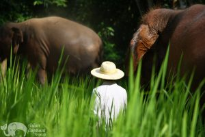 Owner of Hope for Elephants Asian Elephant Projects