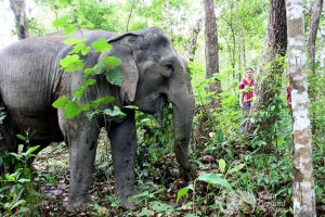 Observing elephants in the forest in Thailand