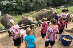 feeding elephants at Karen Elephant Habitat